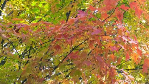 fall joy.jpg